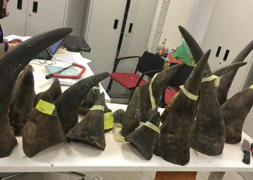 Seized smuggled rhino horns are displayed at a customs office in Hanoi on March 14, 2017