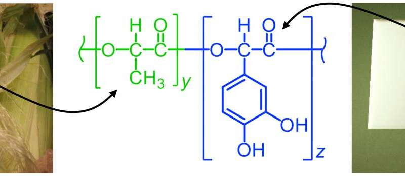 Shellfish chemistry combined with polymer to create new biodegradable adhesive