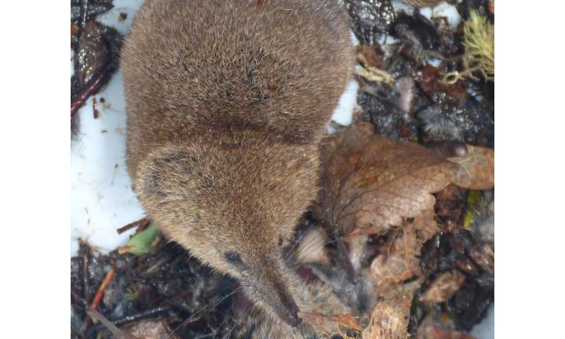 'Shrew'-d study: Arctic shrews, parasites indicate climate change effect on ecosystems