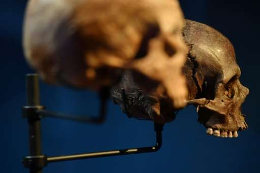 Skulls believed to be Roman and discovered during the Crossrail excavations are seen in the Dockland Museum's 'Tunnel' exhibitio