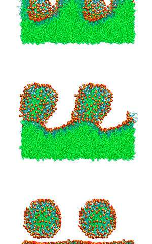 Small changes to a surfactant's structure influence its ability to encapsulate oily molecules