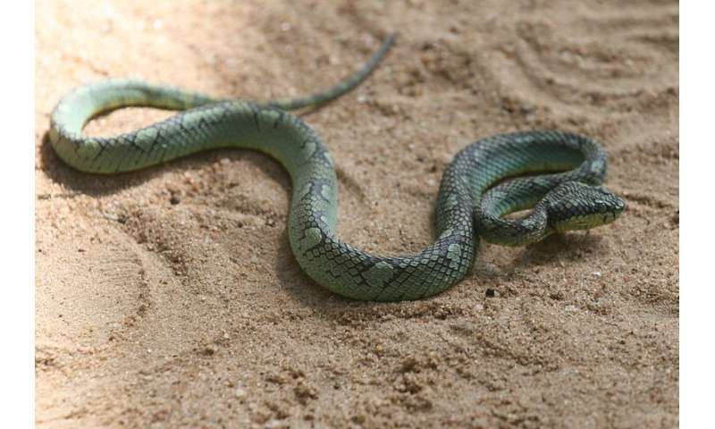 Snakebites cost Sri Lanka more than $10 million