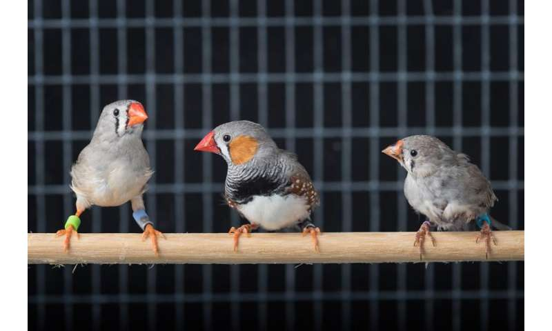 Social cues are key to vocal learning in birds and babies