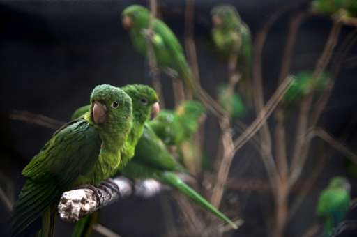 """Some birds at Brazil's Animal Recovery Center of Ibama bear the marks of previous maltreatment, while others say """"Ola"""""""