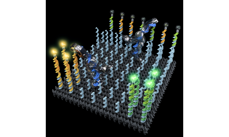 Sorting molecules with DNA robots