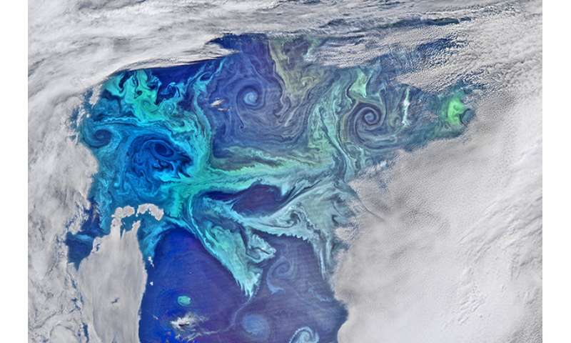 Southern Ocean drives massive bloom of tiny phytoplankton