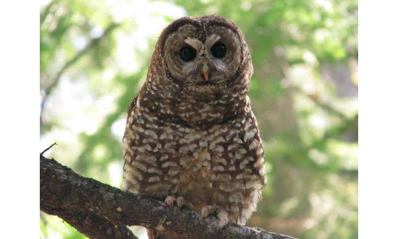 Spotted owls benefit from forest fire mosaic