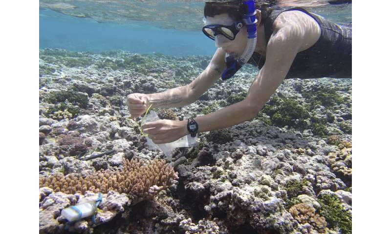 Stanford biologists identify ancient stress response in corals