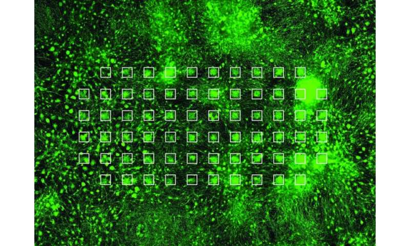 Stem cells derived neuronal networks grown on a chip as an alternative to animal testing