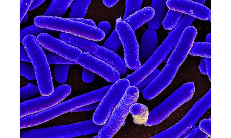 Storming the castle: New discovery in the fight against bacteria