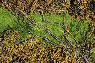 Strong interaction between herbivores and plants