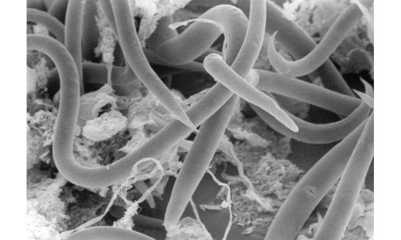 Study of round worm that returns to life after freezing