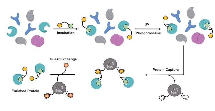 Supramolecular protein fishing with molecular baits