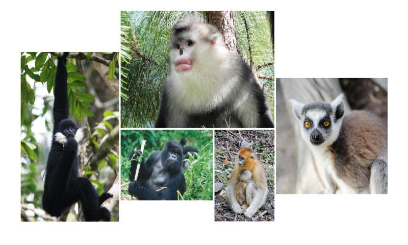 Survival of many of the world's nonhuman primates is in doubt, experts report
