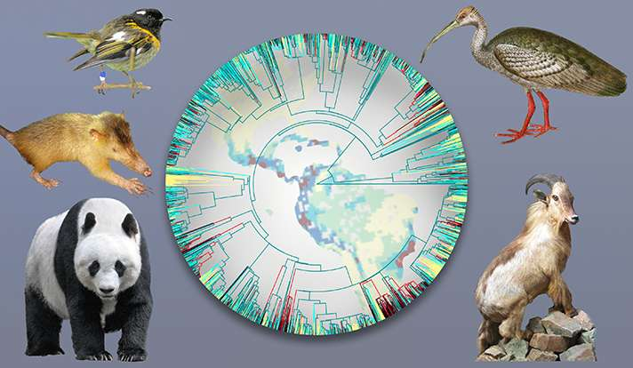 Targeted conservation could protect more of Earth's biodiversity