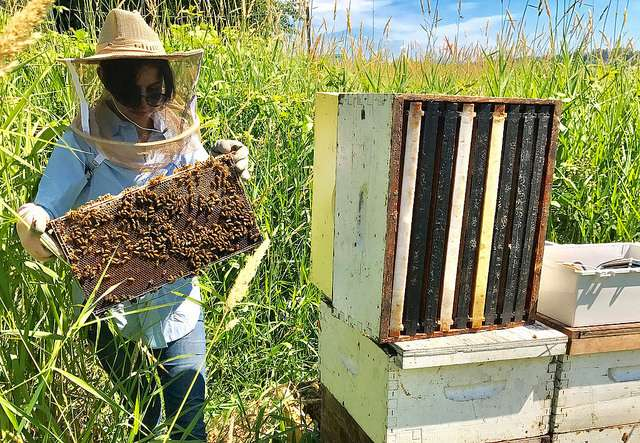 Technology tracks 'bee talk' to help improve honey bee health