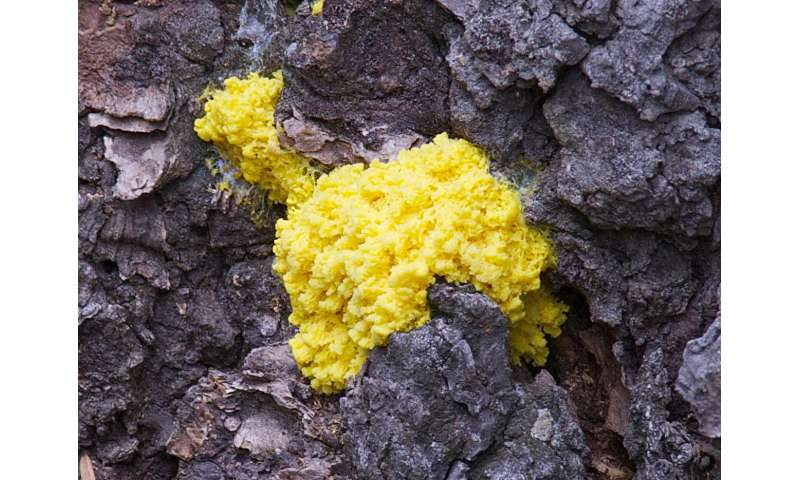 Testing effects of 'noise' on the decision-making abilities of slime mold