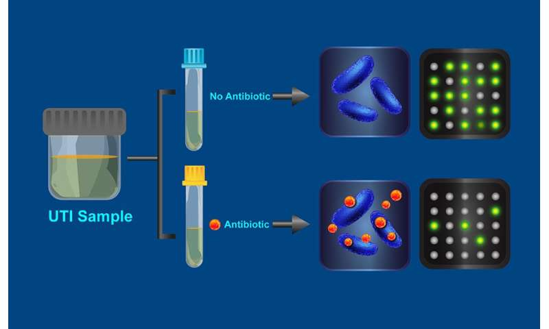 Test reveals antibiotic-resistant bacteria in a half hour