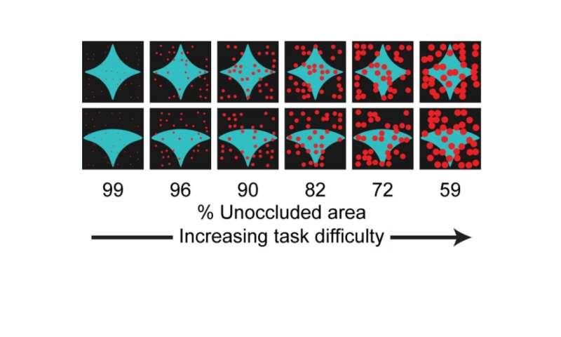 The brain at work: Spotting half-hidden objects