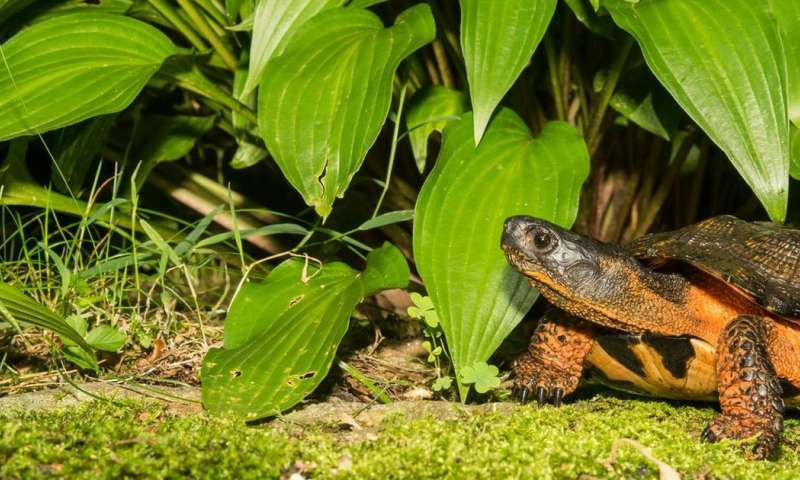 The illegal turtle trade—why scientists keep secrets