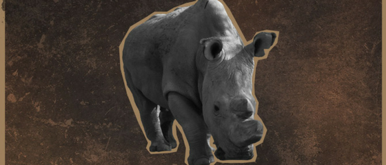 The last remaining male northern white rhino joins Tinder