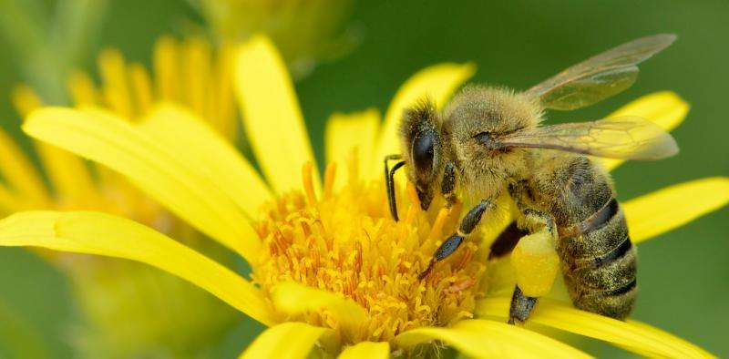 The long quest for the right pollen: how to really help bees