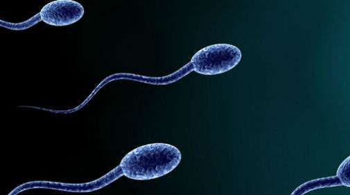 The mechanical properties of sperm tails revealed