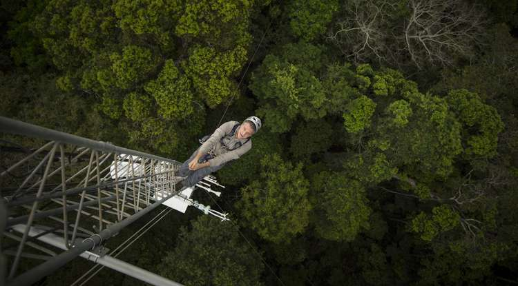 The rainforest contains clues that can help scientists diagnose Earth's changing vital signs
