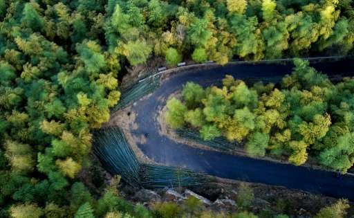 The rich bamboo forests in Lin'an in China's eastern Zhejiang province supply up to two-thirds of the country's bamboo shoots, p
