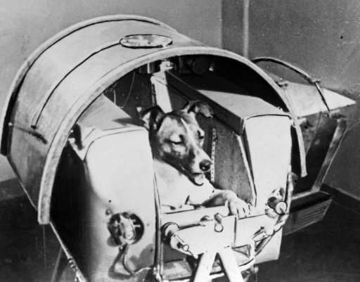 The Soviet daily Pravda published a photo of Laika, a former stray, onboard Sputnik II