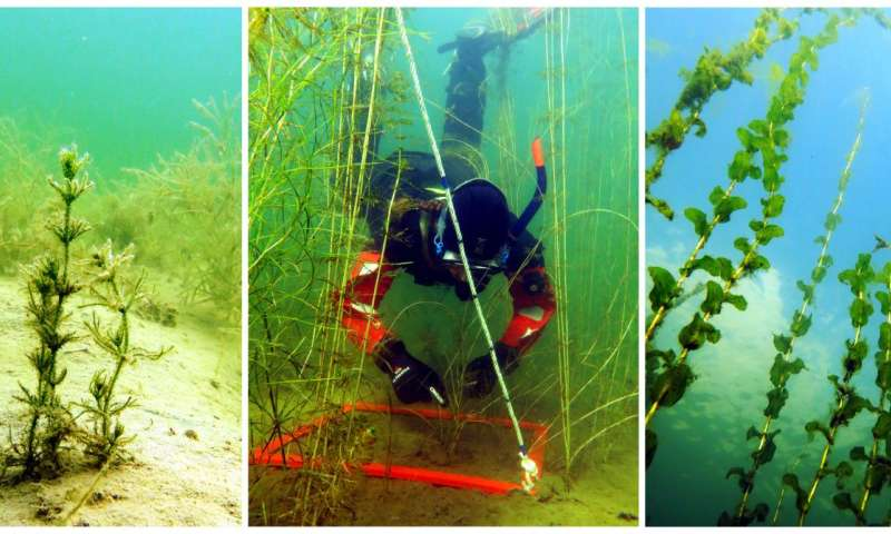 The underwater jungles of the sea give clearer water