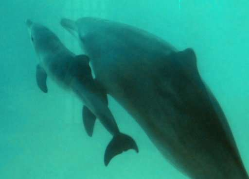 The VR dolphin therapy is designed as an alternative to dolphin-assisted therapies using dolphins in captivity