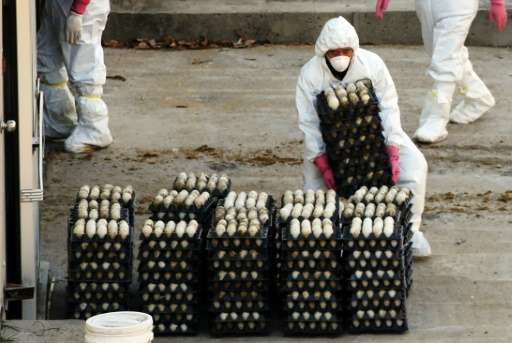 The worst outbreak of the highly contagious strain of avian flu ever to hit South Korea was recorded late last year when a recor