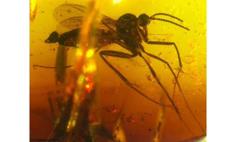 Time flies: Insect fossils in amber shed light on India's geological history