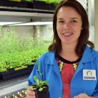 Tiny mutation makes plants less resistant to stressful conditions