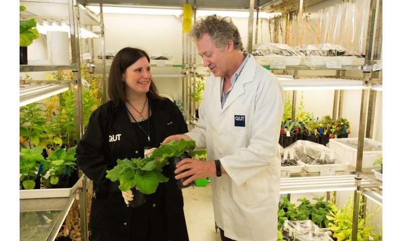 Tobacco plants as life-savers
