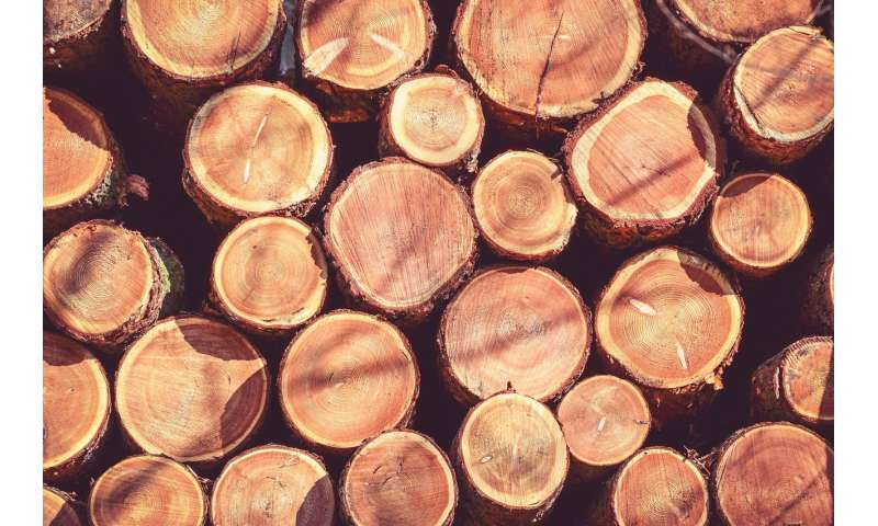 Tree rings used to counter smugglers' rings