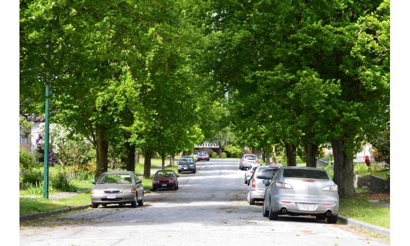 Trees can make or break city weather
