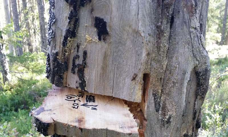 Tree scars record 700 years of natural and cultural fire history in a northern forest