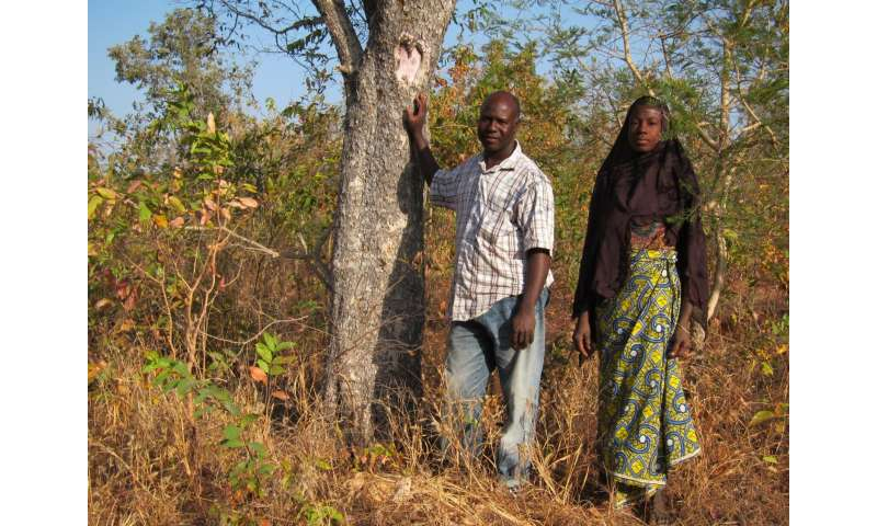 Trees supplement income for rural farmers in Africa