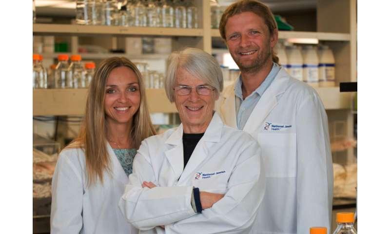 Trigger for autoimmune disease identified