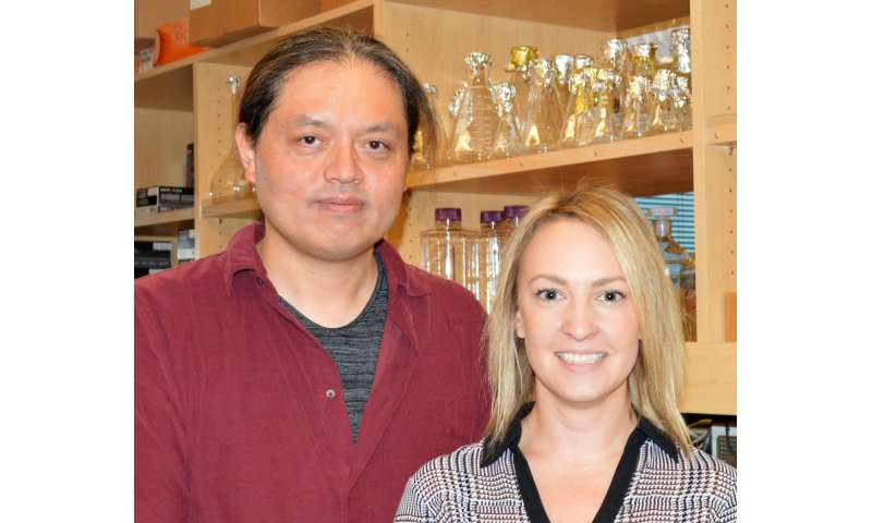 TSRI scientists take step toward mapping how the brain stores memories