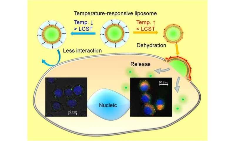 Tunable cellular uptake using temperature-responsive liposome