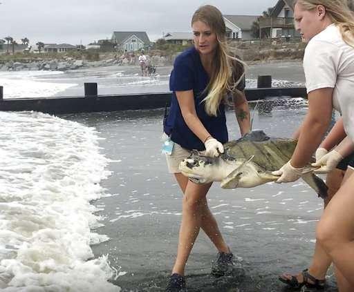 Turtle that swallowed fishing line released in ocean