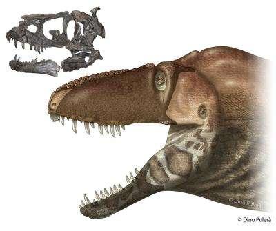 Tyrannosaurs show their sensitive side