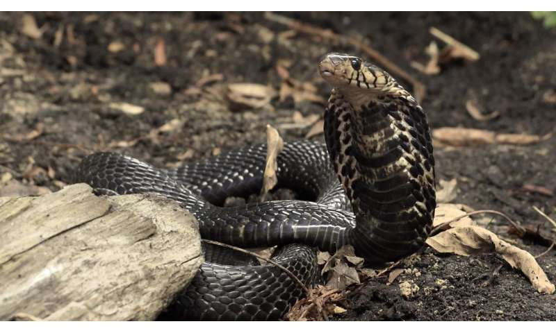 UA part of international alliance to address African antivenom crisis