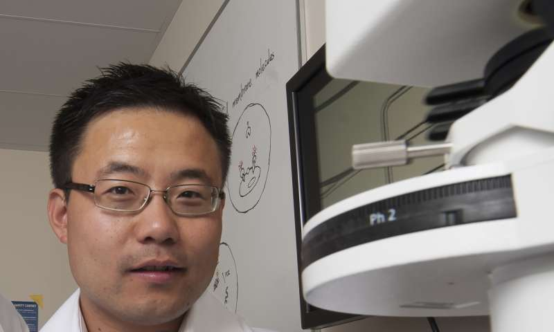UCI stem cell therapy attacks cancer by targeting unique tissue stiffness