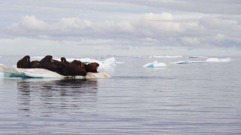 Unraveling a major cause of sea ice retreat in the Arctic Ocean