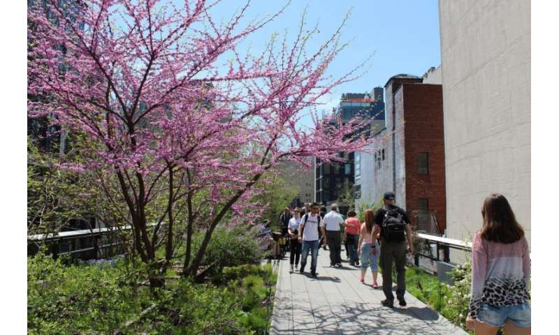 Urban nature—what kinds of plants and wildlife flourish in cities?