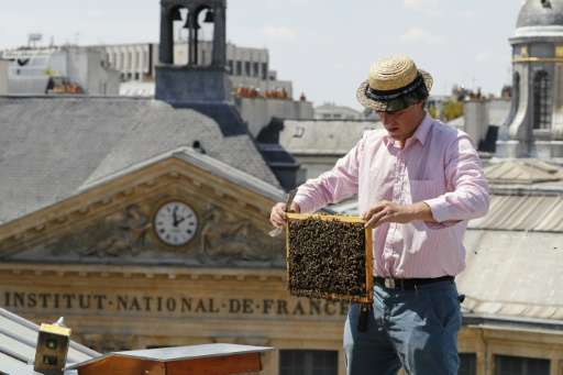 """Urban rooftops are one of the ways Paris is fighting against the """"worrying"""" decline in the bee population, a trend Fra"""